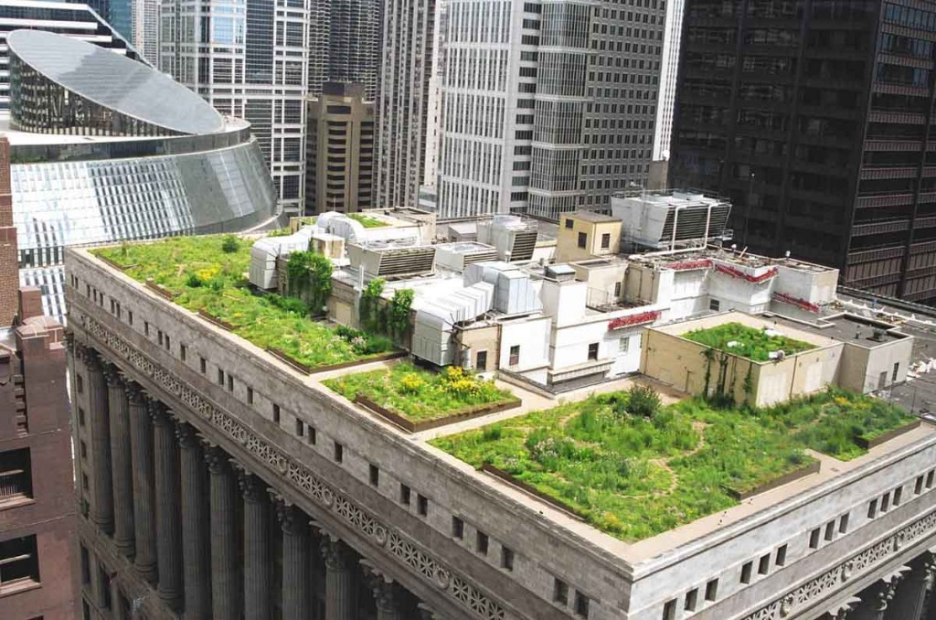 City-Hall-Green-Roof-1024x678.jpg